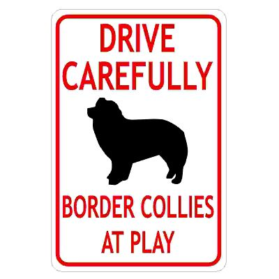 drive-carefully-border-collies-at-play